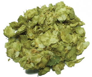 Kent Goldings Leaf Hops