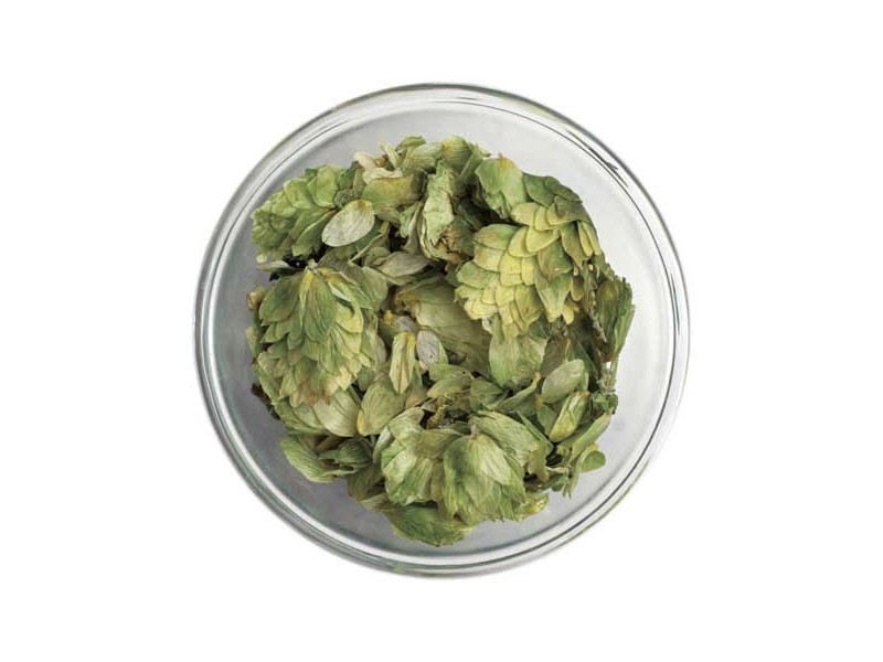 Chinook Leaf Hops